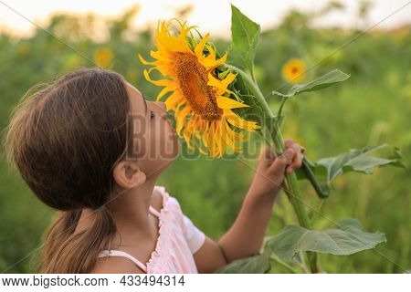 Cute Little Girl With Blooming Sunflower In Field. Child Spending Time In Nature