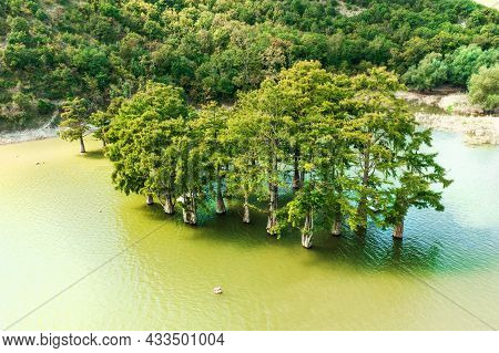 Cypress Trees Standing In Lake Water, Aerial View. Beautiful Nature Park.
