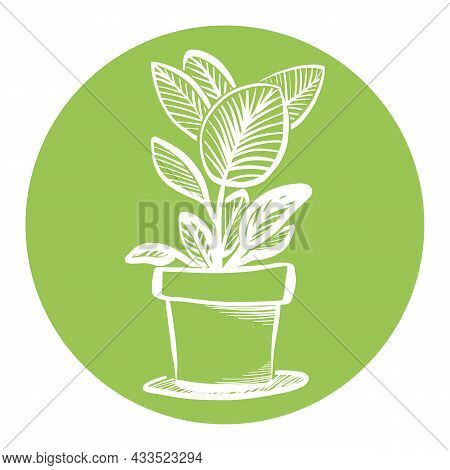Ficus Elastica Tree Or Aspidistra Houseplant Sketch, Potted Rubber Fig Plant Circle Icon, Sticker, L