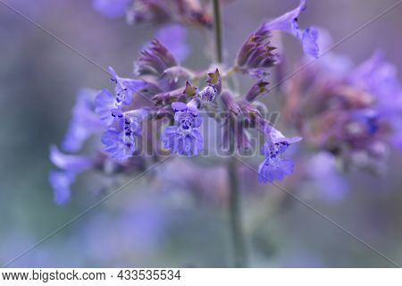 Close Up On Purple Blooming Flowers