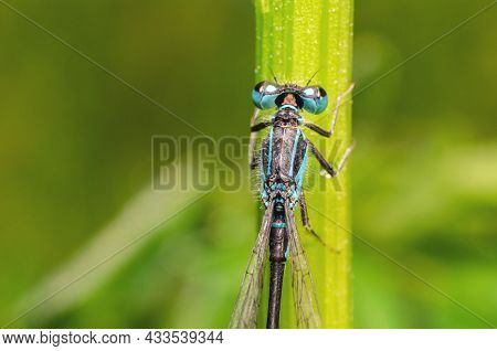 Dragonfly Sits In The Green Grass In The Morning.