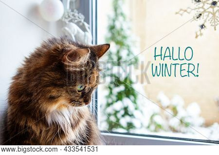 Portrait Of A Cat On The Window, Outside The Window Is A Winter Landscape. Christmas And New Year Co
