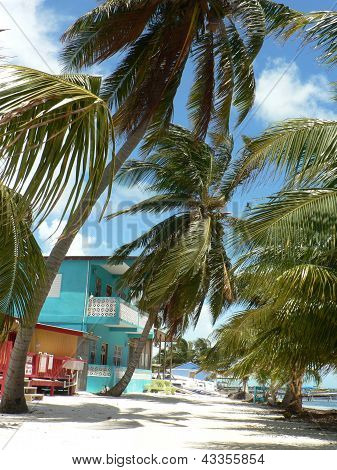 Island street with swaying palms and brightly-painted houses, Caye Caulker, Belize