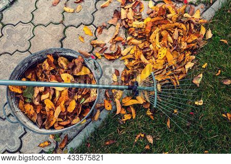 Pile of fall leaves with  rake on lawn. Falling season background.