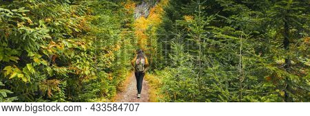 Autumn hike woman walking in pine forest landscape panoramic banner. Hiking in the wilderness panorama.