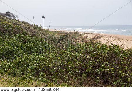 Natural Vegetation Growing On Dunes In Rehabilitation