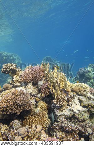 Colorful Coral Reef At The Bottom Of Tropical Sea, Hard And Soft Corals, Underwater Landscape