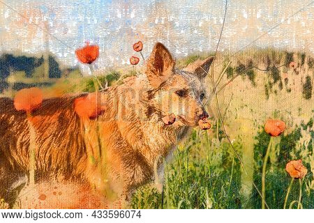 Dog Sniffing Wildflowers In Spring Field. Small Red Dog Of Mixed Breed. Field Of Red Poppies. Sunny