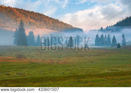 Mountain Landscape On A Foggy Autumn Morning. Coniferous Trees On The Grassy Meadow In The Valley. G