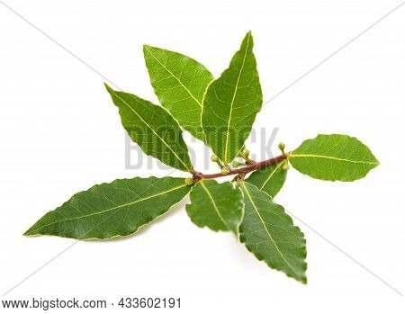 Laurel Branch With Berries And Leaves Isolated On White Background