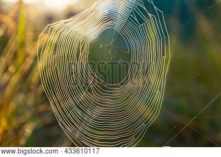 Spider Web With Dewdrops, Wounded By A Cold Misty Morning. Selective Focus.