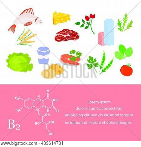 Vector Illustration Vitamin B2 Sources. Healthy Food Containing Riboflavin Enriched With Vitamins. P