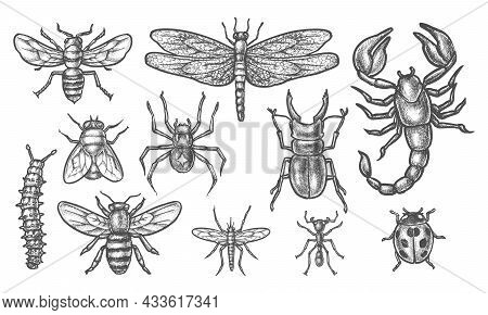 Set Of Isolated Insect Sketch. Vintage Drawing Of Bugs Or Hand Drawn Pest. Malaria Mosquito, Gnat, B
