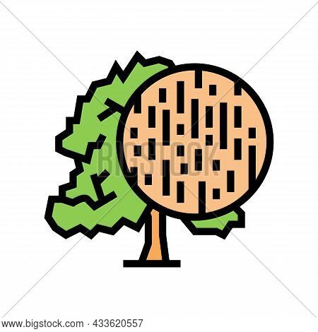 Beech Wood Color Icon Vector. Beech Wood Sign. Isolated Symbol Illustration