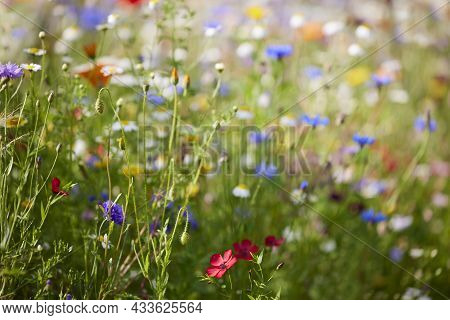 Close Up Of Beautiful Colourful Field Of Wild Flowers Growing