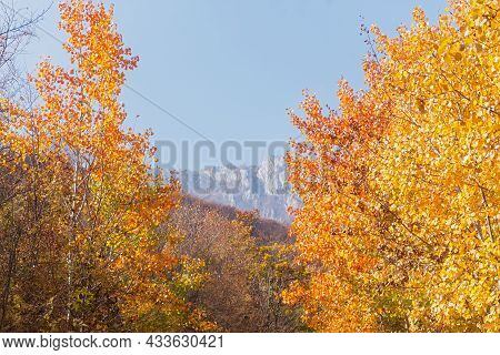 Autumn Aspen Forest. A Sunny Orange-yellow Landscape With Colorful Foliage Of Tall Trees, A Blue Sky