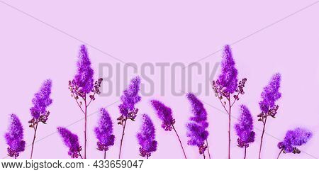Charming Purple Dry Flowers On Pink Background. Flower Power Or Creative Space For Design. Close-up
