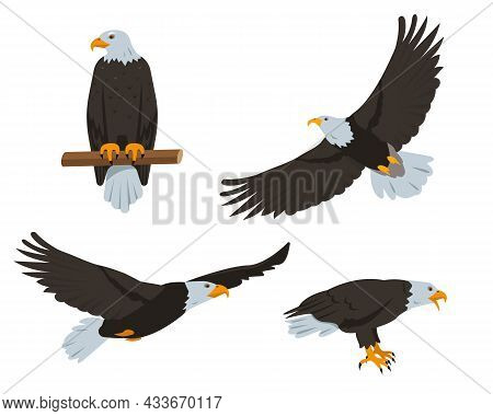 Eagle Birds Set. Flying And Sitting Bald Eagles In Different Poses Isolated On White Background. Nat