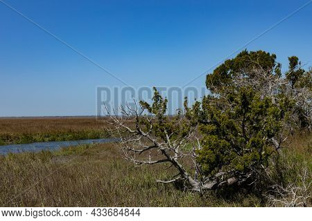 Weather Beaten Tree In A Salt Marsh, Open Water And Deep Blue Sky, Creative Copy Space, Horizontal A