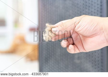 Close Up Hand A Man And Cat Fur With Dust In Air Purifier Filter Basic Cleaning In Home With Orange