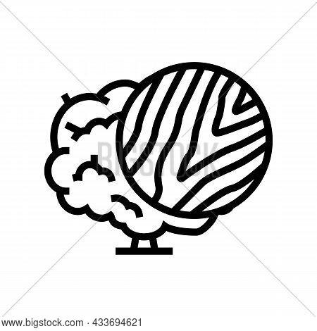 Walnut Wood Line Icon Vector. Walnut Wood Sign. Isolated Contour Symbol Black Illustration