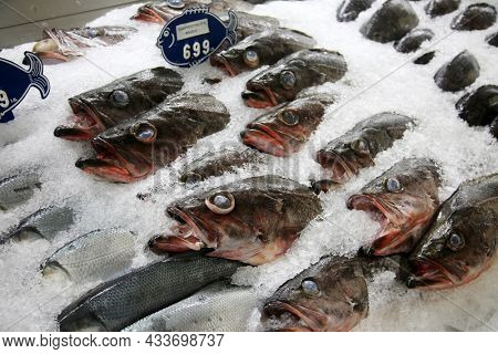 Fish Market. Fresh Caught Fish for sale in a Sea Food Market. Fish Market. Fresh Fish. Wild Caught. Various Sea Animals for sale on ice in a Sea Food Farmers Market.