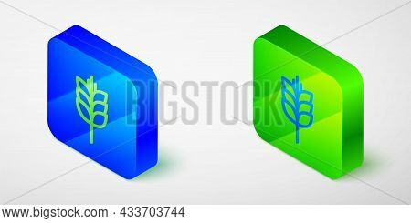 Isometric Line Cereals Set With Rice, Wheat, Corn, Oats, Rye, Barley Icon Isolated On Grey Backgroun