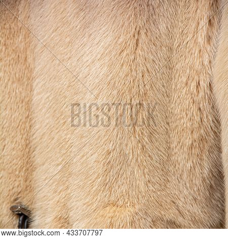 Light Fur On A Fur Coat With A Shallow Depth Of Field And Blur. Shiny, Expensive Pattern With Textur