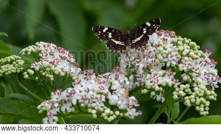 White Flowers And The Butterfly Sitting Against Greens