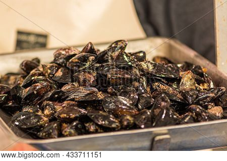 Fresh Mussels Mollusk On A Scale In A Fish Market, Sea Fruits, Sushi, Close Up
