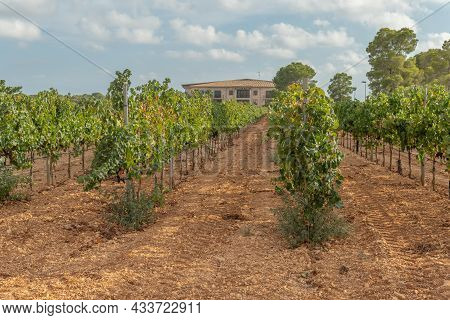 Llucamjor, Spain; September 11 2021: General View Of The Vi Rei Winery Located In The Interior Of Th