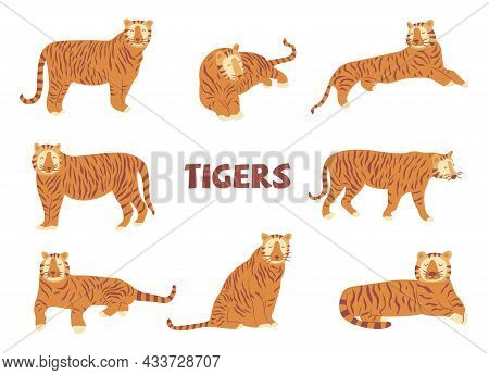 Set Of Tigers. Noble Wild Striped Feline, Fast And Agile Animal. Colorful Vector Isolated Illustrati