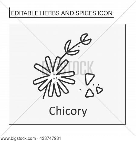 Chicory Line Icon. Crunchy Bitter-tasting Leaves. Herb For Salads, Roots For Coffee.medicine.herbs A