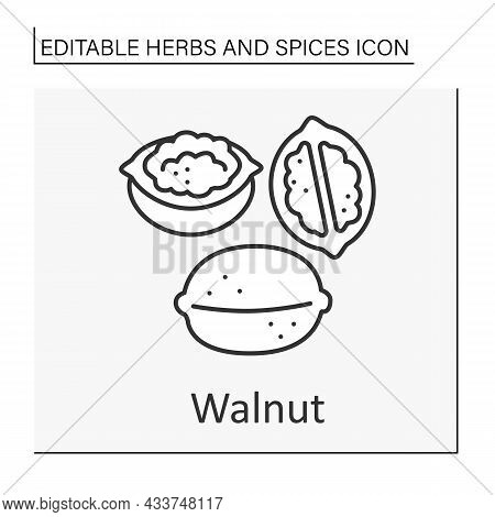 Walnut Line Icon. Additional Flavor For Food. Food Preparation. Culinary. Herbs And Concept. Isolate