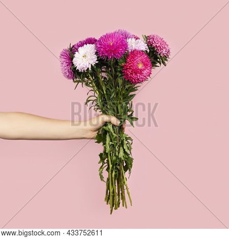 A Large Bouquet Of Beautiful Pink And White Asters In Hand Isolated On Pink Background. Autumn Flowe