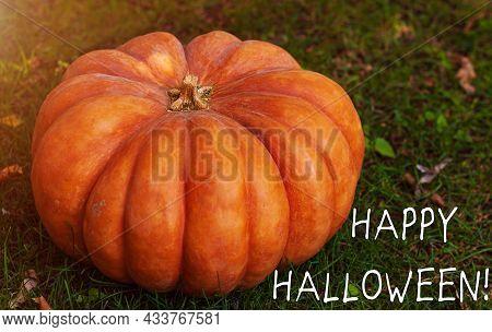 Happy Halloween Greeting Card. Bright Orange Pumpkin On Green Grass Background. Fall Backyard Decor