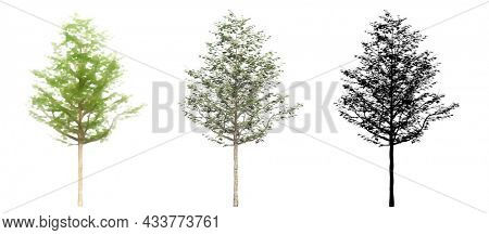Set or collection of American Sycamore trees, painted, natural as black silhouette on white background. Concept or conceptual 3d illustration for nature, ecology and conservation, strength, endurance