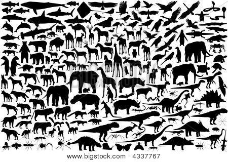 Animal Sihouettes