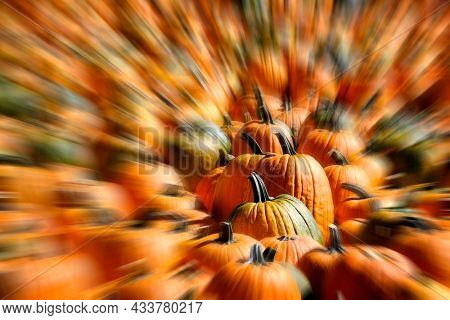 Rows of ripe pumpkins in bright sunlight harvested in fall orange autumn zoom blur