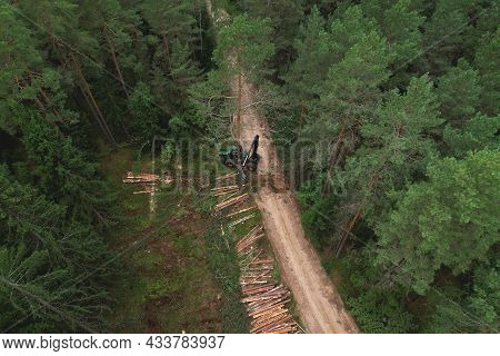 Forest Harvester During Sawing Trees In A Forest. Forestry Tree Harvester In Woodland On Clearing Fo