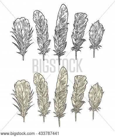 Set Feathers. Vintage Black Vector Engraving Illustration. Isolated White Background