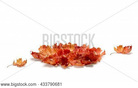 Pile Of Autumn Colored Leaves Isolated On White Background. A Heap Of Different Maple Dry Leaf, Red