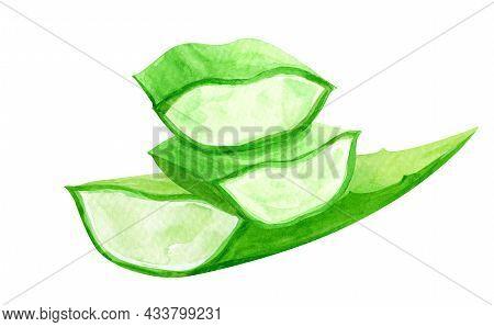 Watercolor Aloe Vera Leaf Hand Drawn Paint, Aloe Leaf Isolated On White, Aloe Vera Illustration