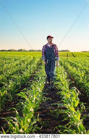 Caucasian Middle Age Farm Worker Walk Along Maize Stalks In Fields Sunset Time Somwhere In Ukraine