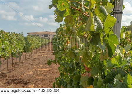 Llucmajor, Spain; September 11 2021: General View Of The Vi Rei Winery Located In The Interior Of Th