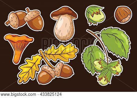 Autumn Harvest Sticker Set. Oak Leaves, Acorns, Hazelnut, Mushrooms. Collection Of Forest Decorative