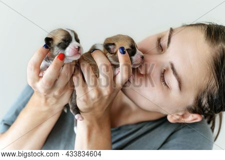 Young Woman Kisses Two Cute Welsh Corgi Pembroke Puppies Holding Them In Hands. Day Of Dog Breeder.