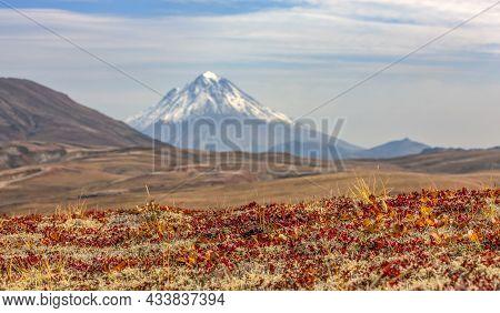 Vilyuchinsky Volcano In Autumn. Kamchatka Peninsula. Selective Focus