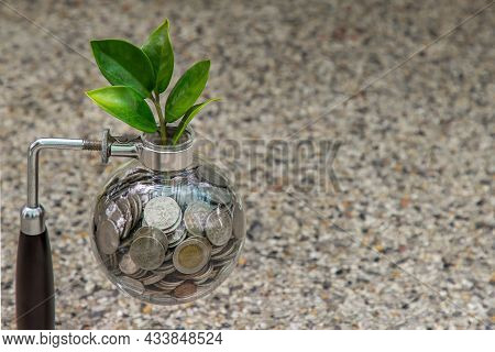 The Saplings That Grow On The Pile Of Coins In A Glass Bottle Symbol For Business Growth. Investment