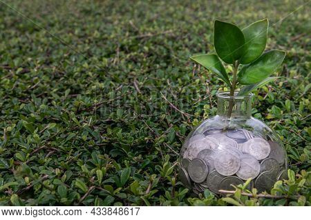 The Saplings That Grow On The Pile Of Coins In A Glass Bottle On Green Nature Background Symbol For